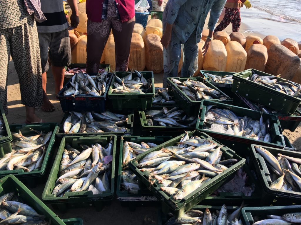 The Importance Of Sustainable Fisheries